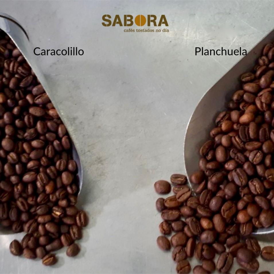 Granos de café caracolillo y planchuela tostados